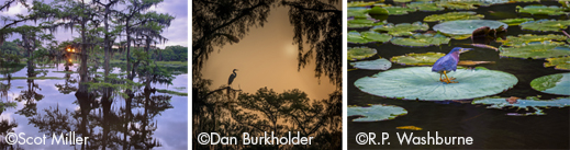 Fine photographic prints of Caddo lake by six photographers, at Sun to Moon gallery, benefiting caddo Lake Institute