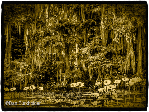 Fine photographic print of Caddo Lake by Dan Burkholder, at Sun to Moon Gallery, Dallas, TX – Partial sale proceeds benefit Caddo Lake Institute