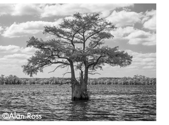 Fine art photogfap of Caddo Lake by Alan Ross, ANsel Adams' photographic assiatant, at Sun to Moon Gallery, Dallas, TX