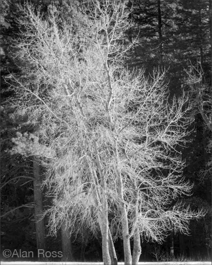 Fine gelatin silver print by Alan Ross, available at Sun to Moon Gallery, Dallas