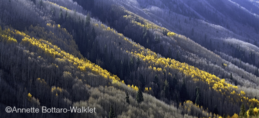 Fine photographic print of Colorado aspens by Annette Bottaro-Walklet, at Sun to Moon Gallery, Dallas, TX