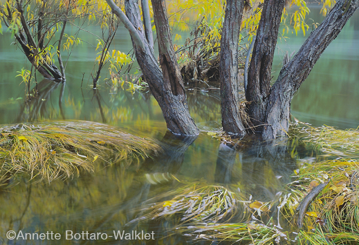 Yosemite fine photographic print by Annette Bottaro-Walklet, at Sun to Moon Gallery, Dallas, TX