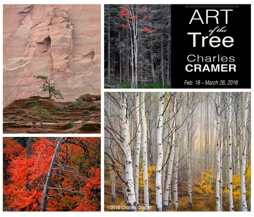 Art of the Tree with CHARLES CRAMER, photography exhibition at Sun to Moon Gallery, Dallas, TX
