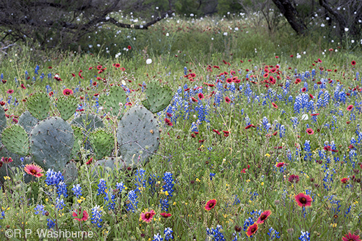 Fine Photographic Print from the Texas Hill Country by R.P. Washburne, available at Sun to Moon Gallery. Dallas, TX