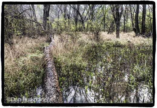 Fine photographic print of Great Trinity Forest by Dan Burkholder, at Sun to Moon Gallery