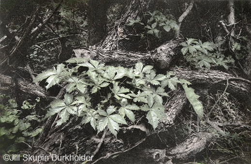 Fine photographic print of the Great Trinity Forest by Jill Skupin Burkholder, at Sun to Moon Gallery