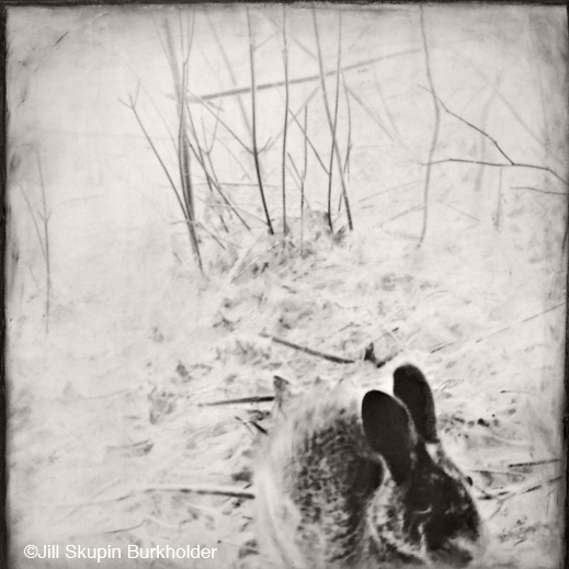 Encaustic wax and archival print from trail camera photo by Jill SKupin Burkholder, at Sun to Moon Gallery
