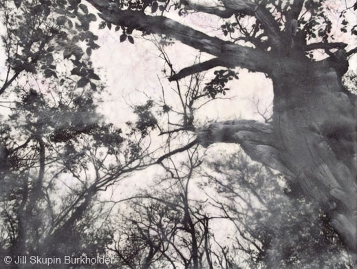 Photograph © Jill Skupin Burkholder, availavle at Sun to Moon Gallery